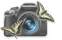 Online-forening for NaturFotografer