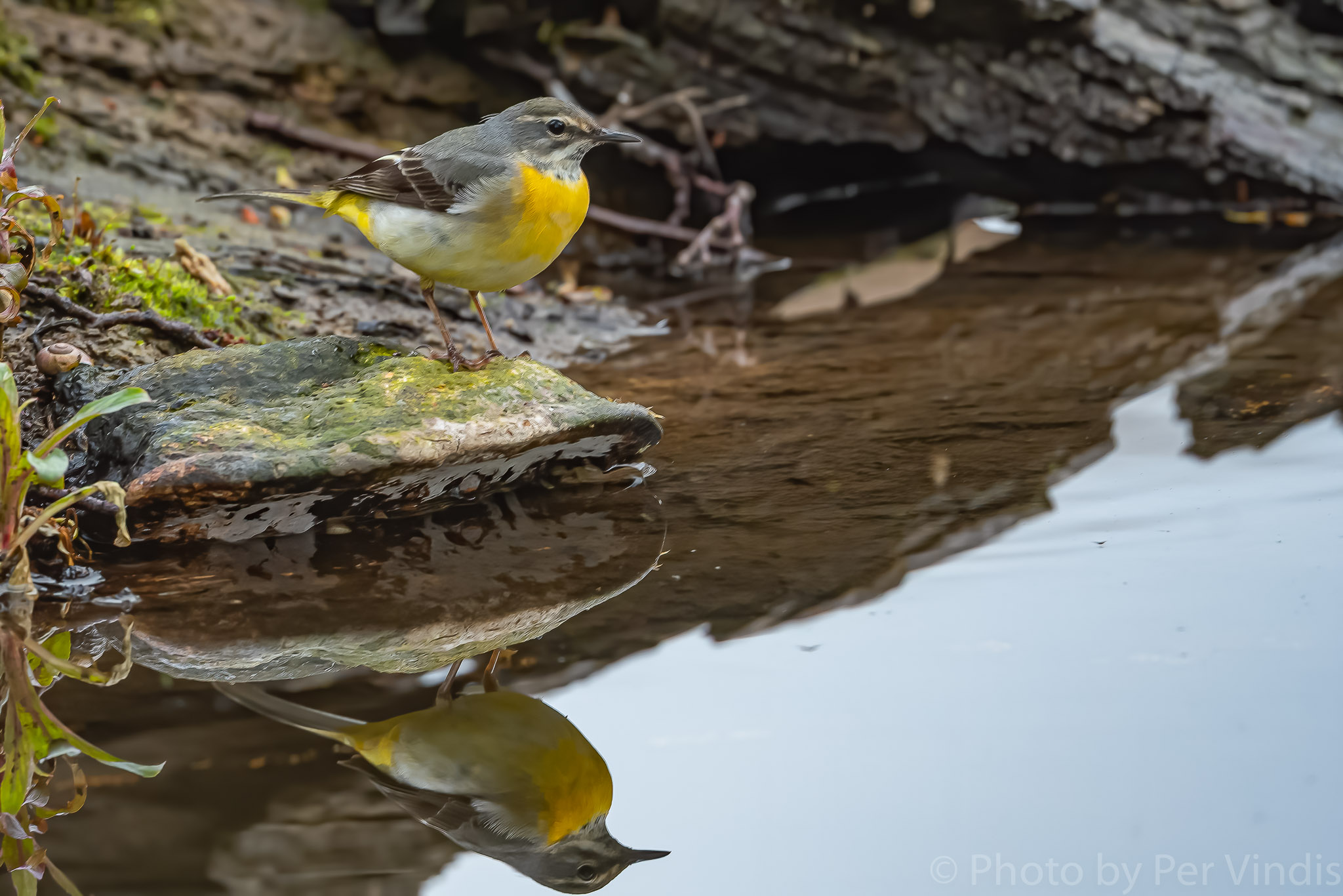 Author: Per Vindis