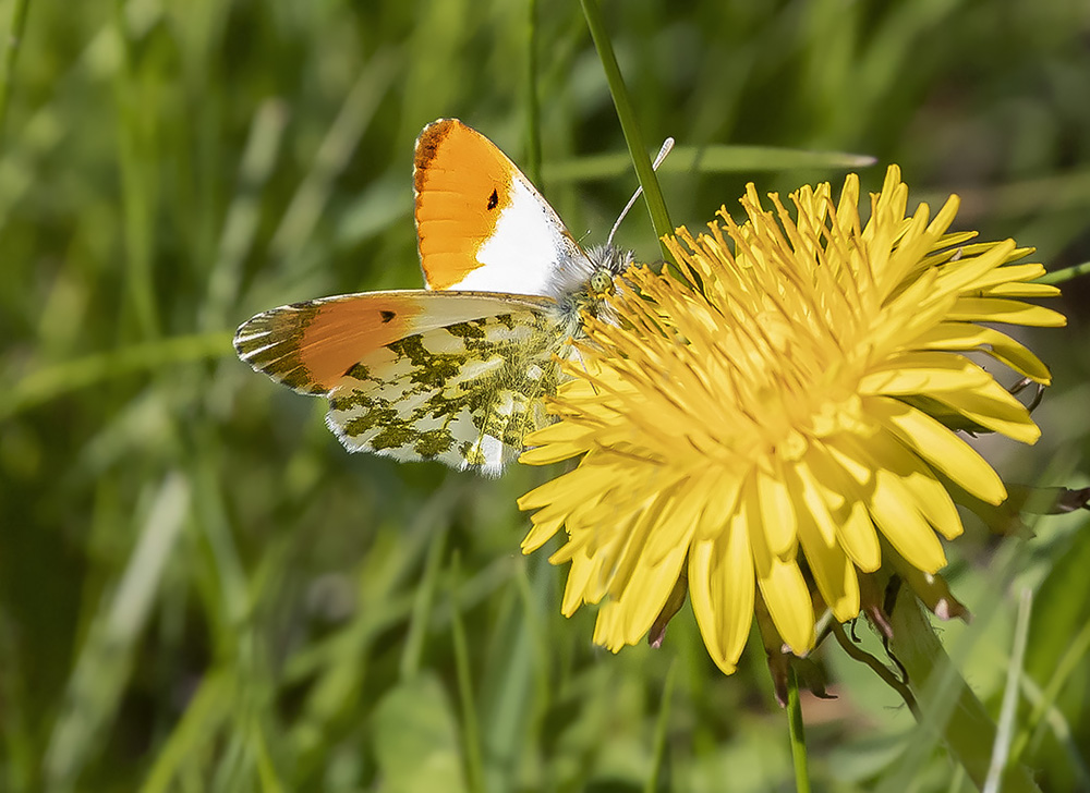Author: Knud Ellegaard