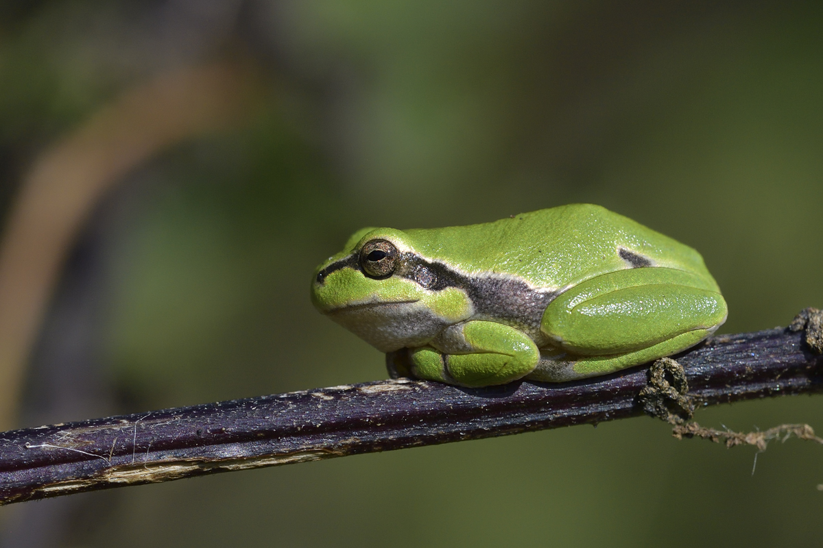 Author: Frank Joe