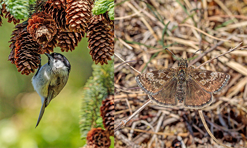 Author: John Strange Petersen